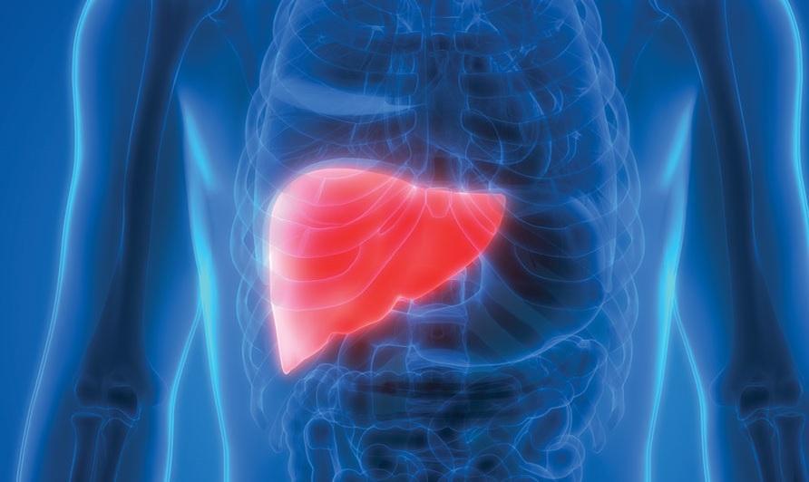 شفيت من دهون الكبد تجربتى
